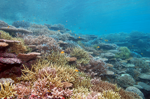 米原プカピー一帯の珊瑚礁
